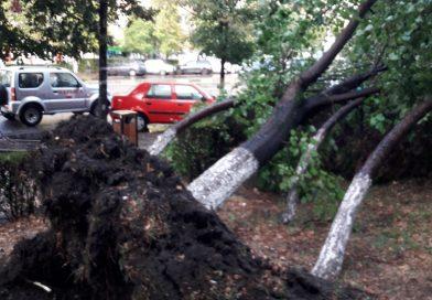 Deva după furtună: Acoperișuri luate de vânt și copaci rupți – galerie FOTO și VIDEO