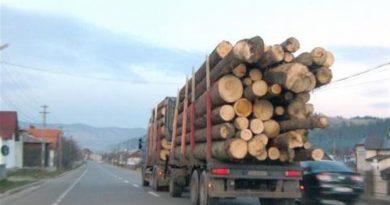 Comunitatea Forestierilor respinge ideea exportului de gaze naturale în condiţiile crizei lemnului de foc