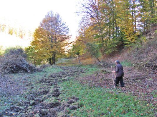 Marginile pădurilor sunt umblate nu doar de hunedorenii amatori de bureți, ci si de porcii mistreți.