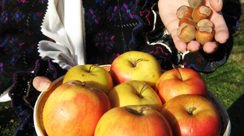 Cerișorenii se mândresc cu fructele lor mari și gustoase.