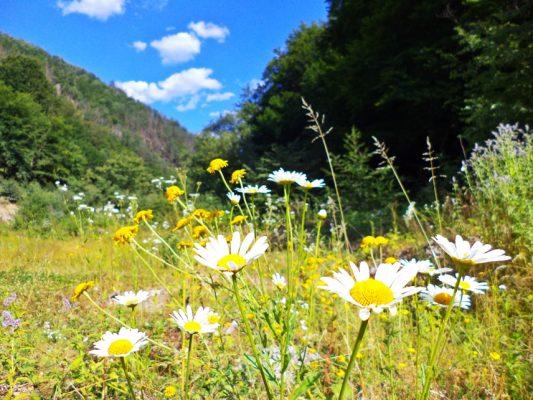 Dolomita poate duce la îmbogatirea componentei floristice.