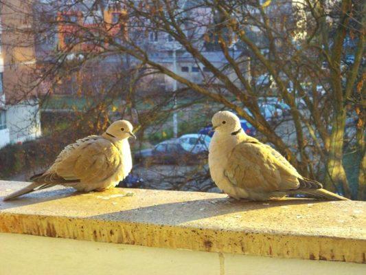 Lunea păsărilor aduce primăvara mai aproape.