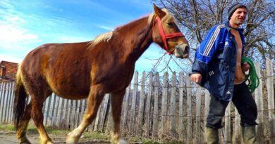 Caii lui Sântoader aduc primăvara și marele post al Paștelui