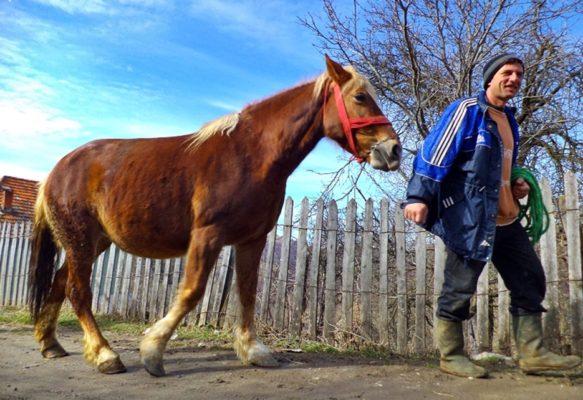 Hunedorenii de altădată mitizau frumoasele animale şi credeau că, în această perioadă, caii fermecaţi au ai lui Sântoader le-ar putea lua viaţa, dacă nu respectau restricţiile.