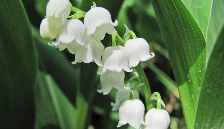 Lecția de frumusețe și smerenie a florii.