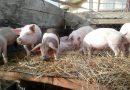 Tîrgurile de animale interzise în județ