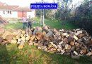 Prinși cu lemne fără documente legale