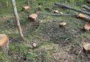 Dosar penal pentru tăieri și furt de arbori