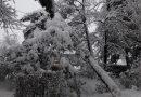Iarnă grea: 28 de localități fără curent, drumuri blocate de arbori căzuți