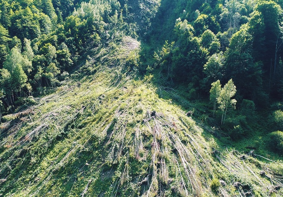 Arborii căzuți în zona de protecție integrală a Parcului Național Retezat rămân neridicați