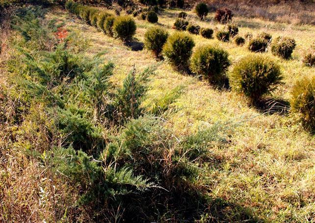 Zeci de mii de puieţi superbi îşi caută stăpân. Pepiniera Simeria se desfiinţează