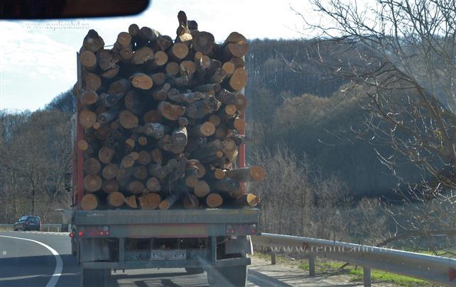 Ministerul Mediului solicită celor care îşi desfăşoară activitatea în domeniul silvic să se înscrie în SUMAL 2.0