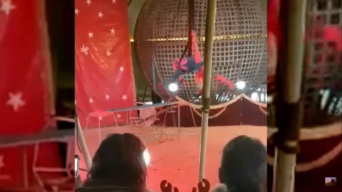 CLIPE DE GROAZĂ LA UN SPECTACOL DE CIRC DIN HUNEDOARA