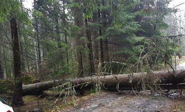 Drumul spre Poiana Pelegii este blocat