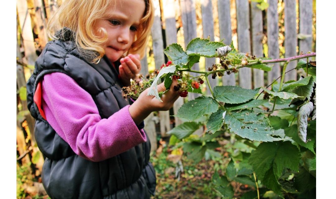 Vreme nebună: pomii înfloresc, smochinii şi fructele de pădure dau a doua recoltă