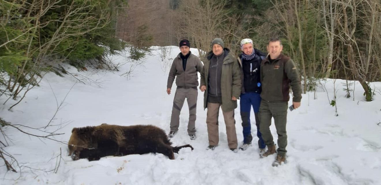 Urs filmat într-o gospodărie din Apuseni