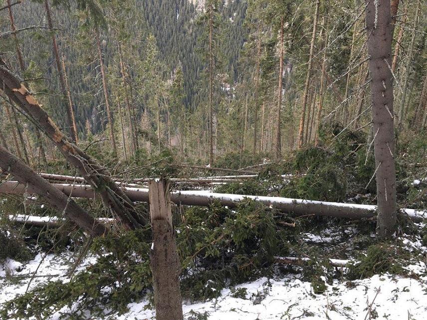 Suprafețele afectate de vijelii vor fi reîmpădurite