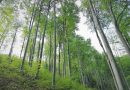 SUMAL 2.0, cel mai important instrument în lupta cu tăierile ilegale de pădure, intră în vigoare la 1 noiembrie