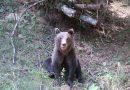 Întâlnire cu un urs pe un traseu montan din Parâng