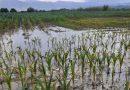 Culturile agricole, afectate de inundații