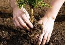 Niciun proprietar de teren nu a solicitat bani pentru împăduriri