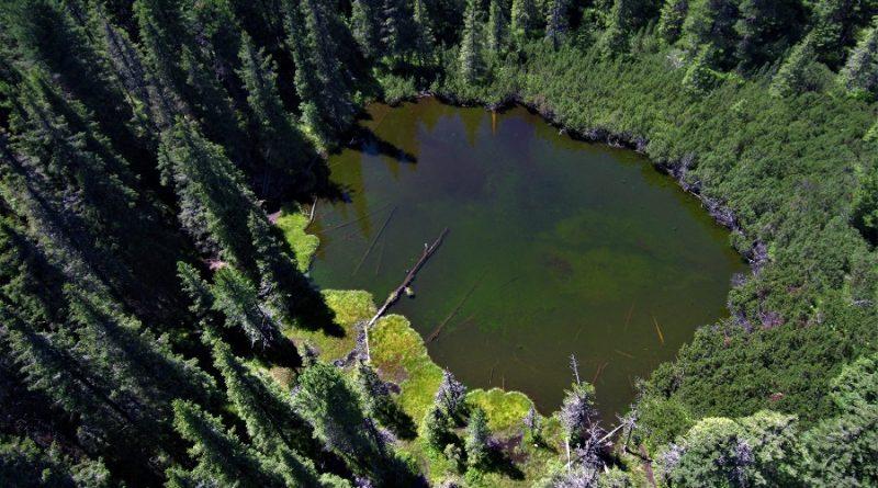 Ministrul Mediului promovează Parcul Național Retezat