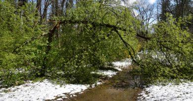 Arboretum Simeria afectat de cea mai distrugătoare iarnă (GALERIE FOTO)