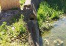 Cursurile de apă unde s-au produs inundații, verificate de comisii mixte