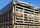 Florin Cîțu despre transportul cu animale vii, pe perioada caniculei